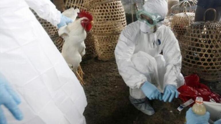 Fransa'da kuş gribi paniği başladı
